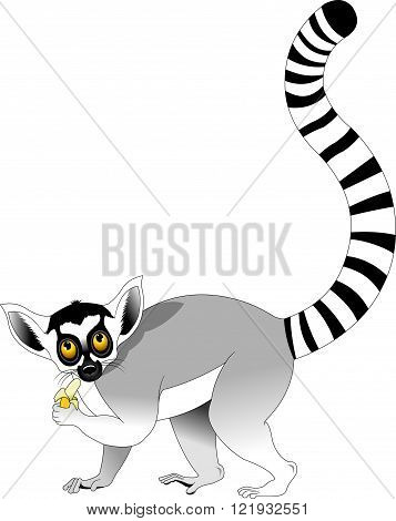 hilarious lemur with big striped tail vector and illustration