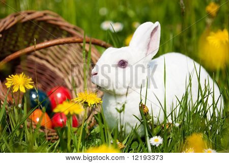 Coelhinho da Páscoa em um prado primavera bonita com Leão em frente a uma cesta com ovos de Páscoa