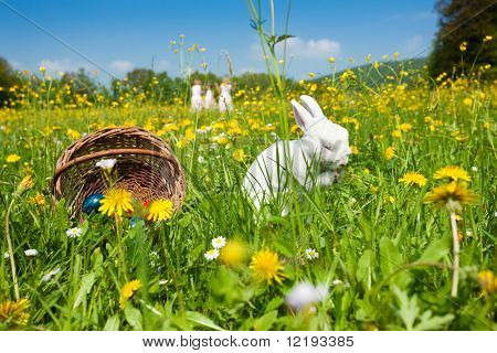 Easter bunny on a beautiful spring meadow with dandelions in front of a basket with Easter eggs; children in the background coming on an Egg hunt