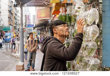 HONG KONG, CHINA - FEB 9: Lonely young man looking for a small aquarium fish from set of fishes in plastic bags on zoo market on February 9, 2016. More than 47 mill. tourists visit Hong Kong annually