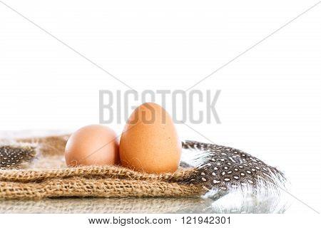 Eggs of a guinea fowl
