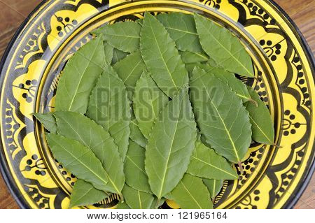 Whole freshly picked Bay or Bay Laurel leaves used in cooking to flavor dishes.