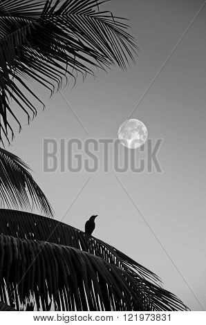 Lonely raven sitting on a palm branch.