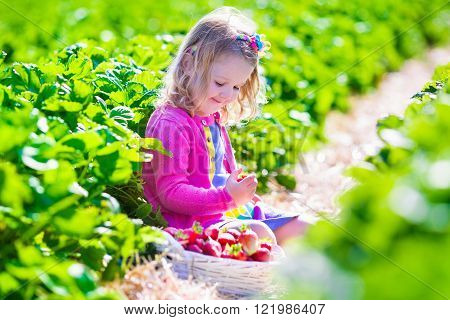 Child picking strawberries. Kids pick fresh fruit on organic strawberry farm. Children gardening and harvesting. Toddler kid eating ripe healthy berry. Outdoor family summer fun in the country.