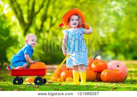 Kids playing at pumpkin patch at Halloween. Children play and pick pumpkins on a farm. Toddler girl and baby boy in a wheel barrow harvest vegetables in autumn. Fall outdoor fun for family with child