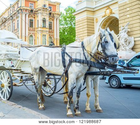 ODESSA UKRAINE - MAY 17 2015: The horse drawn carriage is the most romantic transport in old Odessa on May 17 in Odessa.