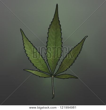 A square format image of a mature marijuana leaf set on a gradient background.