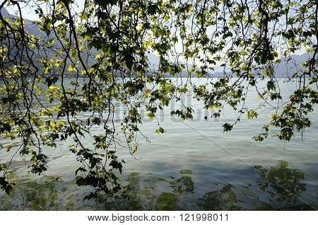 Green foliage and lake of Annecy, France