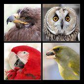 Постер, плакат: Set Of Four Birds