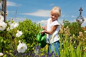 stock photo of flower girl  - Little girl watering the flowers in the family garden at a summer day - JPG