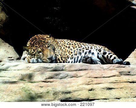 Sleeping Jaguar