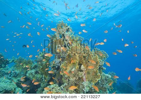 Beautiful Coral Reef Scene