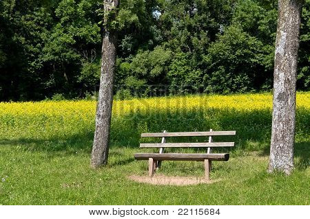 Bench Waiting For You