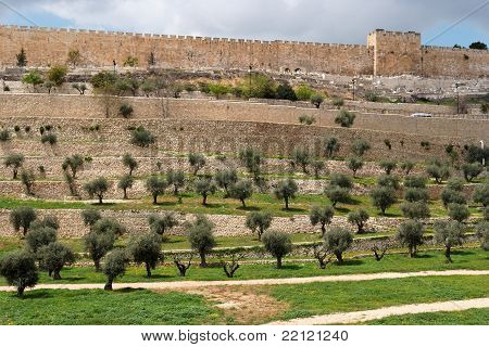 Terraces of the Kidron Valley and the the wall of the Old City in Jerusalem