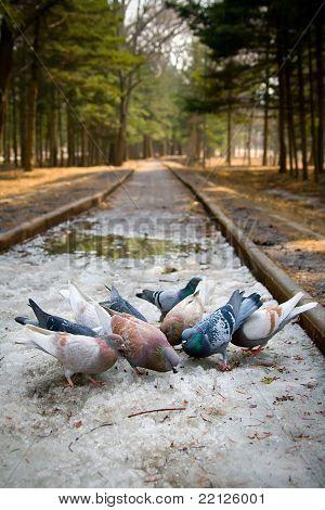 Doves in park
