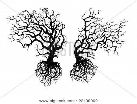 Old Crooked  Trees