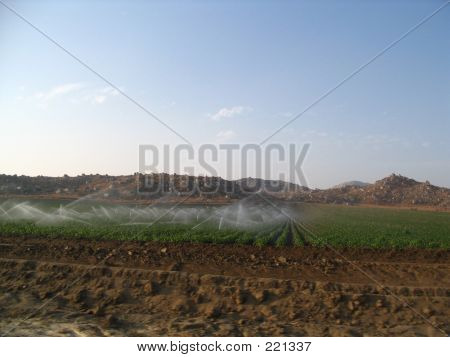 Sprinklers On The Farm