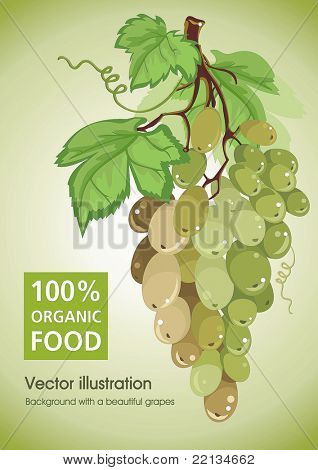 Green grapes cluster with green leaves isolated on white - vector illustration.