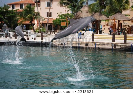 Flying Dolphins - 1