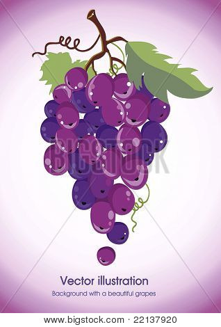 Violet grapes cluster with green leaves isolated on white - vector illustration.