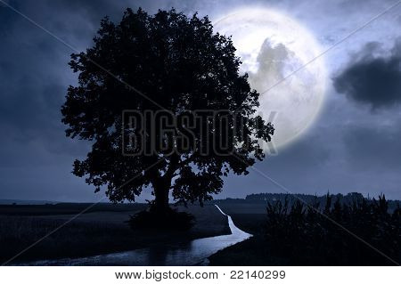 Full moon over a corn field