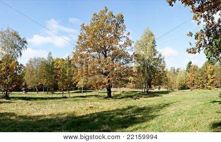 Autumn in urban forest