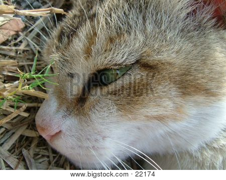 Macro Shot Of A Cat Lying On Dried Grass