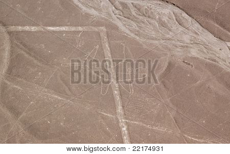 Nazca Lines Whale