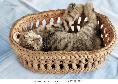 Adorable Kitty Sleeping In Basket