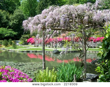 Japanese Garden And Wisteria Arbor Stock Photo Stock