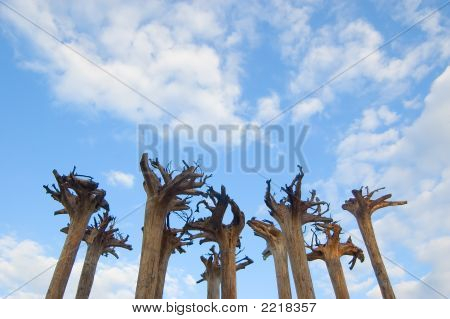 Abstract Installation - Roots Of Trees