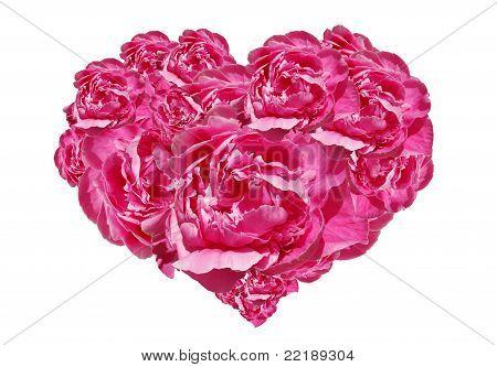 Pink Peony Heart
