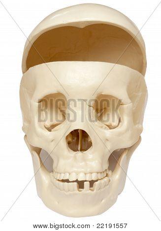 Empty skull