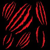 Animal Claws Scratching. Tiger or Bear Paw Scratching on Black Background. poster