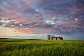 image of dauphin  - Sunset over farm buildings and wheat swaying gently in the evening breeze Gilbert Plains Manitoba Canada - JPG