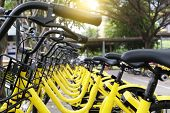 Rows Of Bright Yellow Public Rental Bikes On A Stree poster