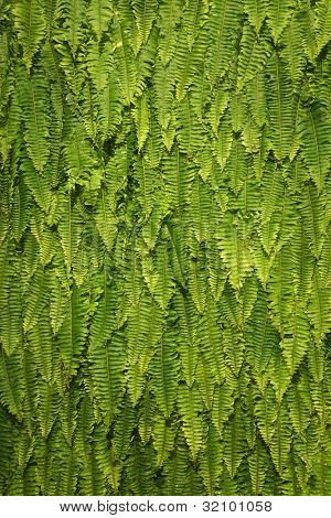 Nature Green Fresh Fern Background