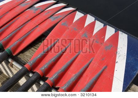 Oars At Crew Race