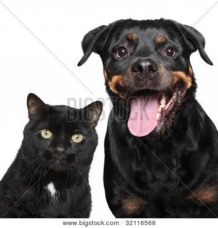 Retrato de gato e de cão branco