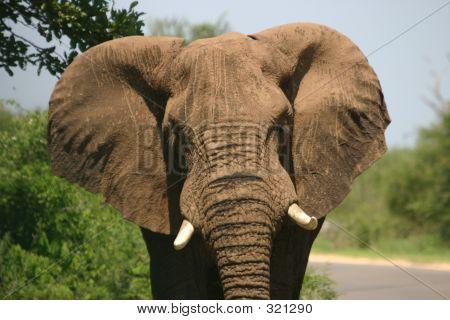 Carga de elefante