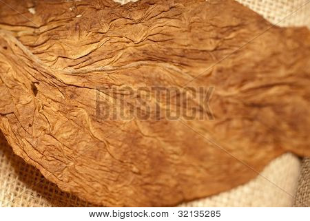Dry Tobacco Texture