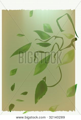 backgrounds, vector, leaves, spring
