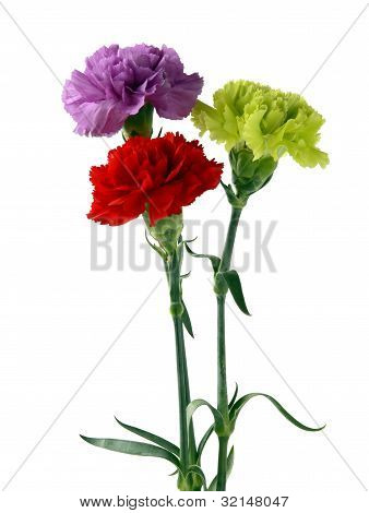multicolor carnations in posy