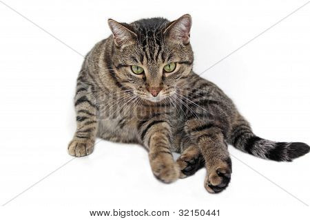 Cat on with backround