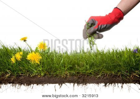 Jardinería