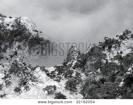 Snowy mountains with pine trees and fog.