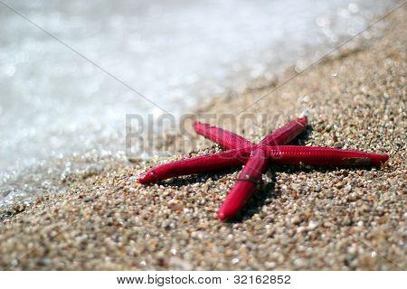 Starfish On A Tropical Beach