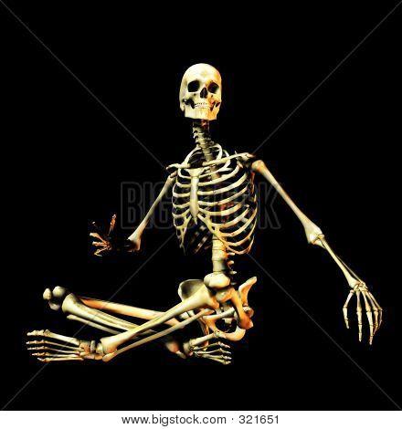 Bone 6
