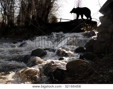 Waterfall And Bear