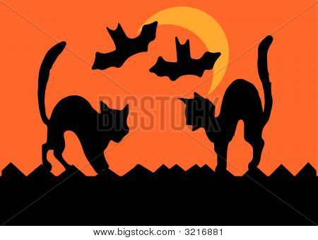 Halloween Cat Fight
